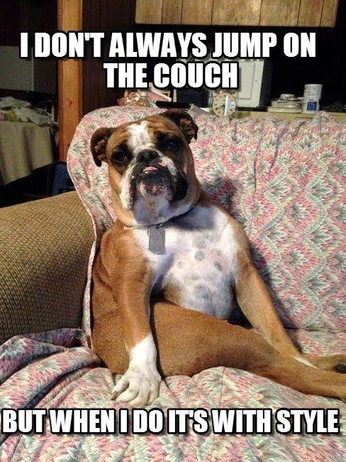 English Bulldog Meme Google Search Funny Dogz Amp Catz