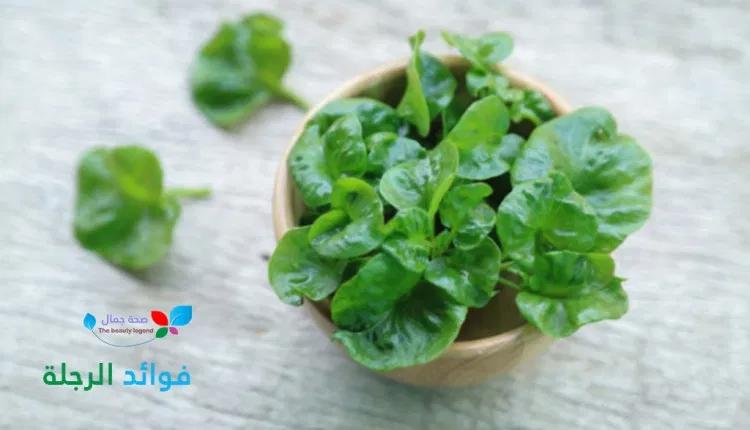 فوائد الرجلة عشبة الرجلة أو عشبة البقلة تعرف الى الفوائد الصحية المذهلة لها Sehajmal Food Vegetables Spinach