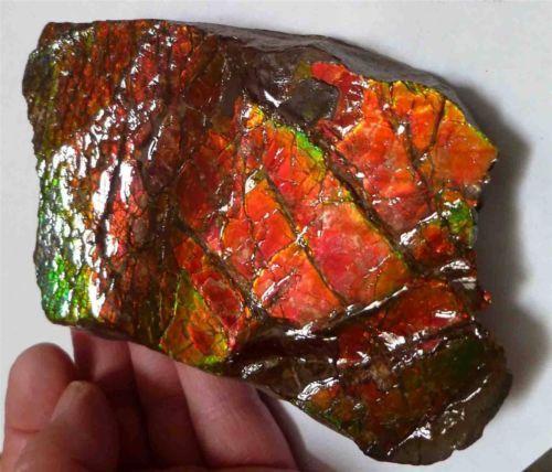 2423carats Bright Christmas Colors! AMMOLITE Ammonite 130 x 77mm