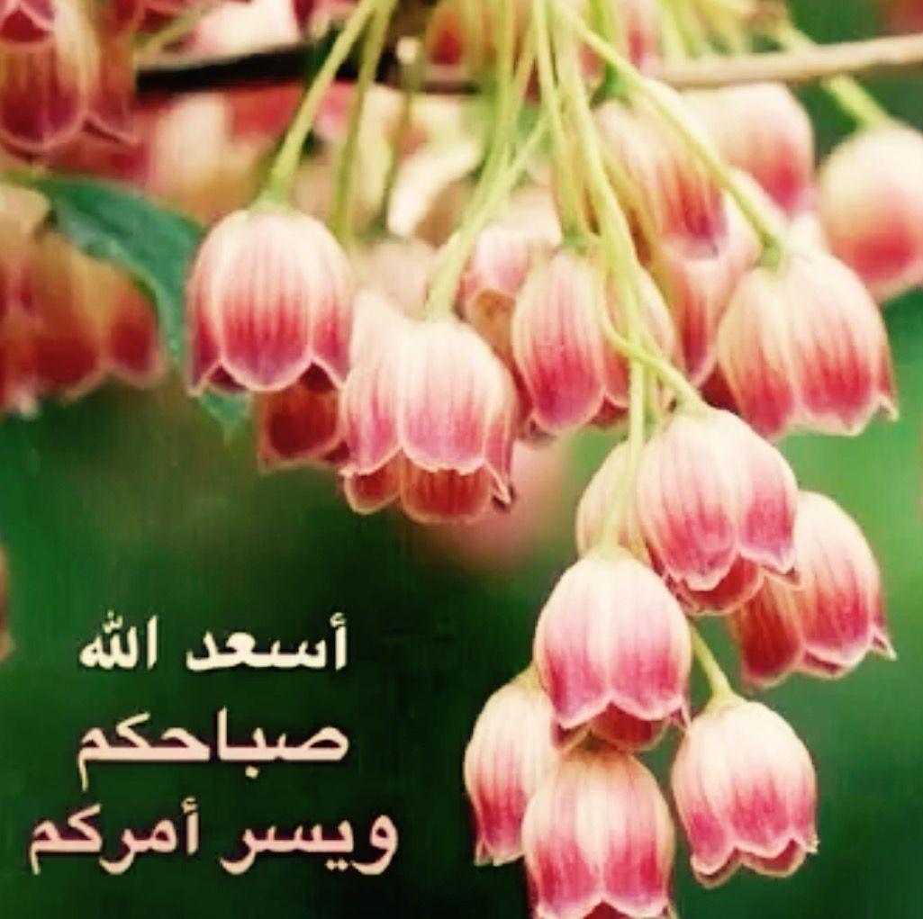 Desertrose أسعد الله صباحكم بكل خير صباح الورد Beautiful Flowers Images Flower Care Trees To Plant