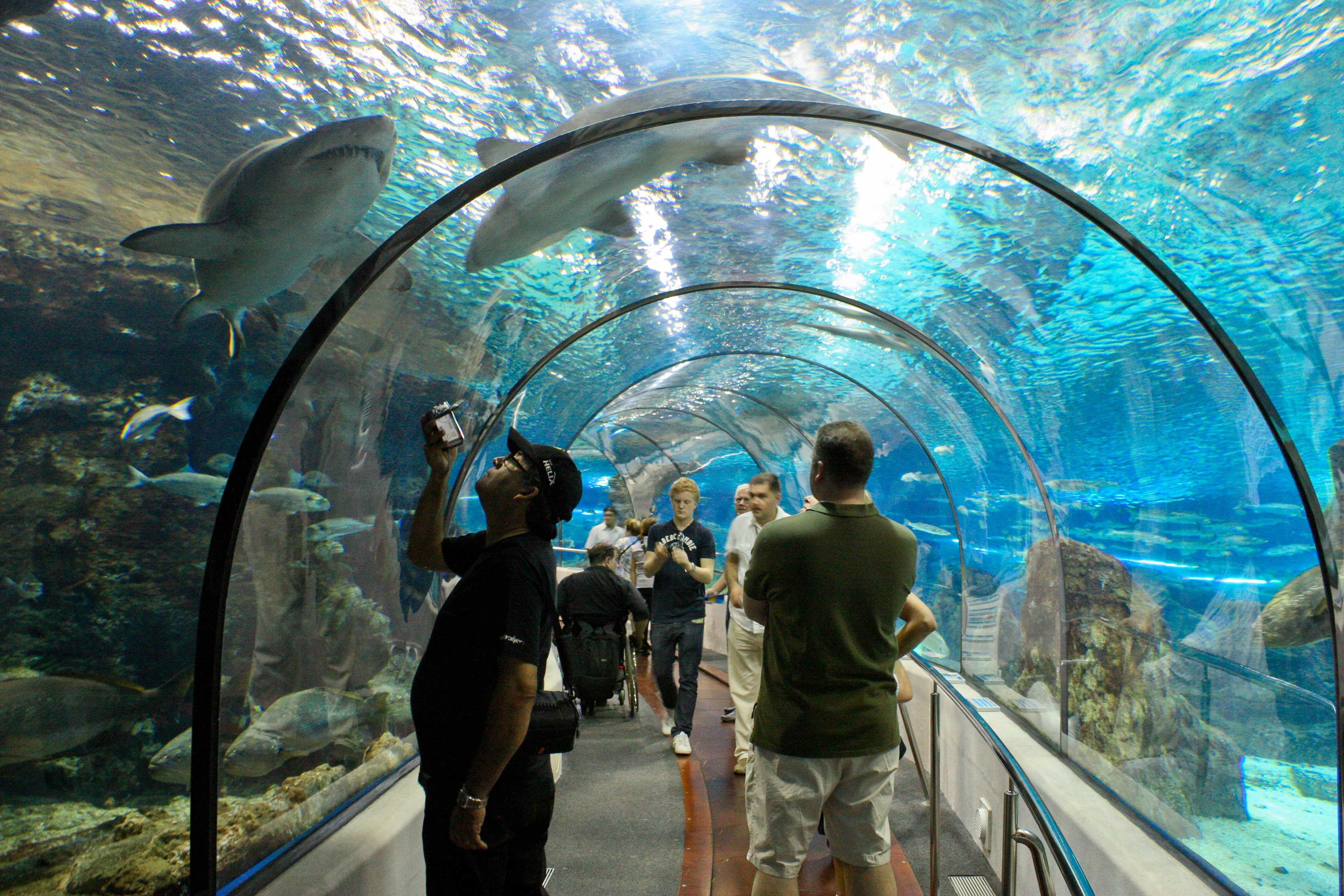 L 39 aquarium de barcelona spain an unforgettable for Aquarium de barcelona