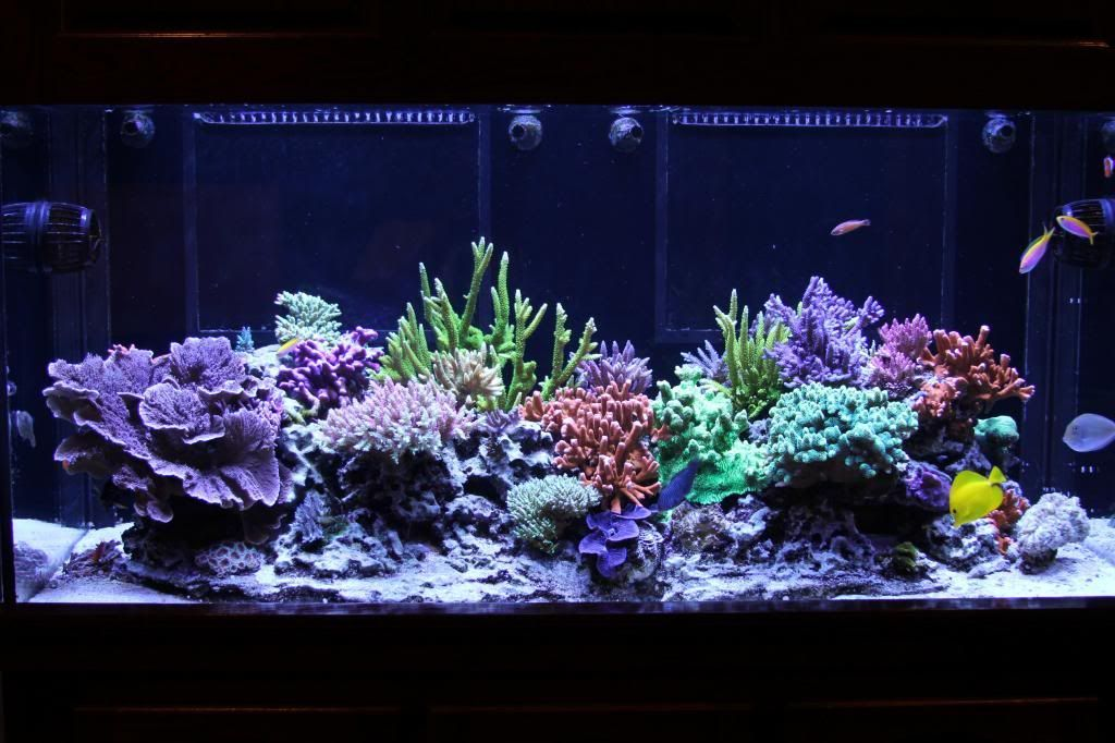 Could raising alk be the cure to your algae issues https