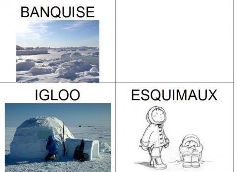 Vocabulaire p le nord et p le sud arctique animaux polaires banquise - Animaux pole nord ...