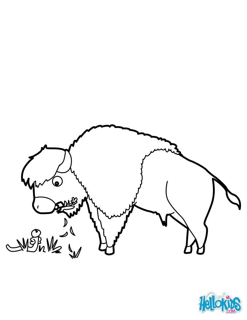 Grazing Bison coloring page. More Forest Animals coloring sheets on ...
