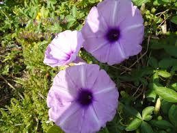 Resultado De Imagem Para 25 Flores Silvestres E Seus Nomes Com