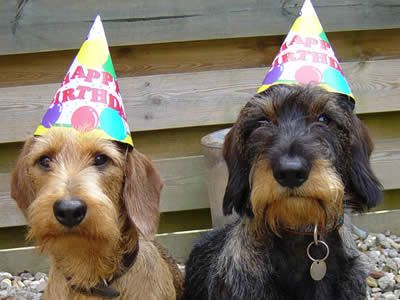 Wire Haired Weenies Wish You Happy Birthday Dog Birthday