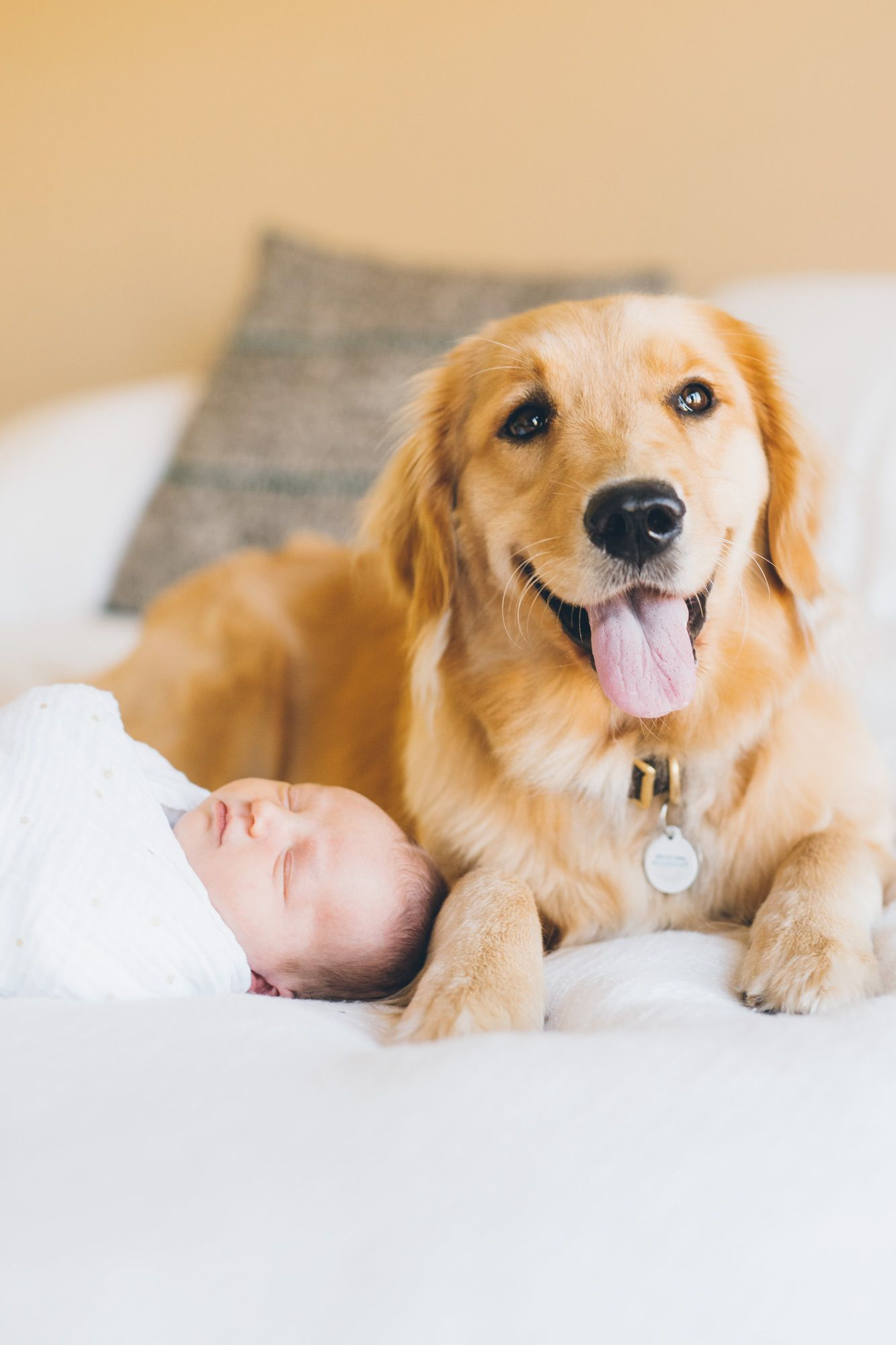 Golden Retriever Puppy With A Newborn Baby Girl During A Lifestyle