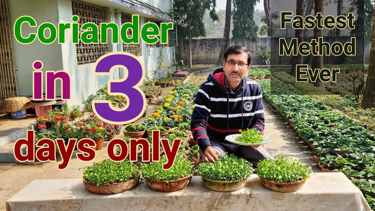 Fastest Growing Method Of Coriander No One Told You Before