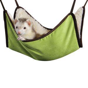 All Living Things Ferret Hammock Petsmart Ferret Cute