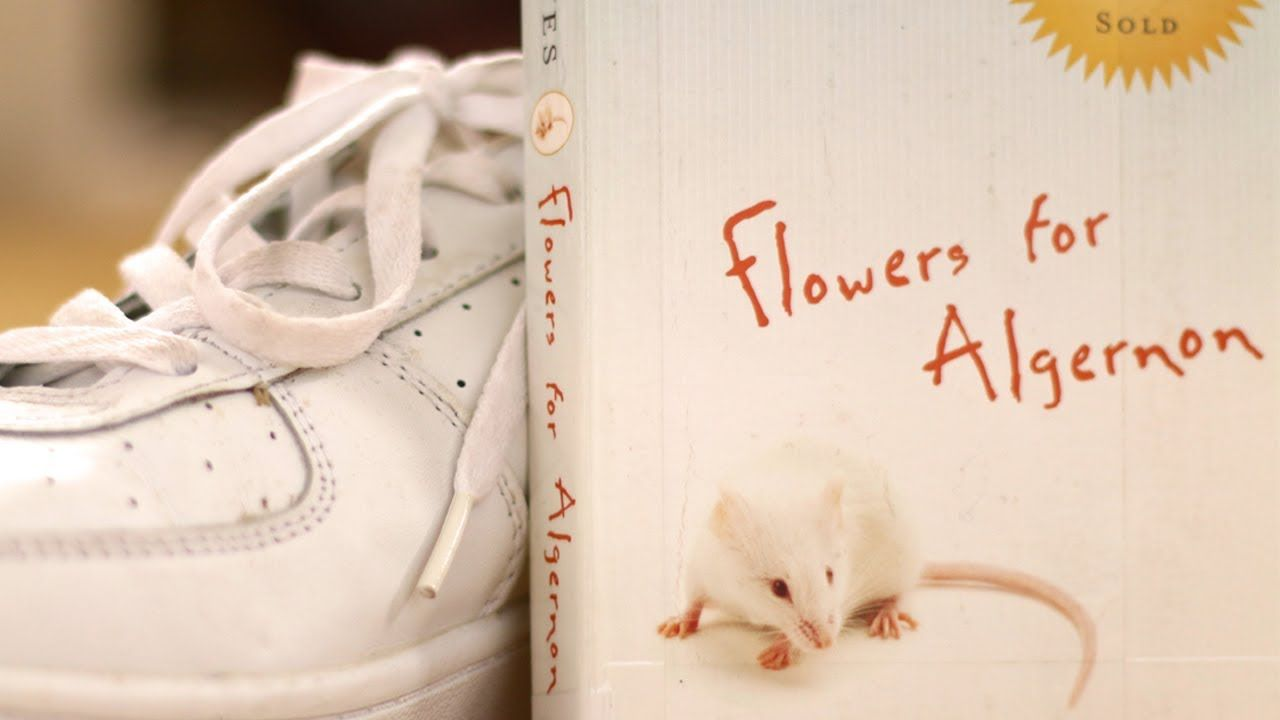 Flowers for Algernon by Daniel Keyes , Minute Book Report