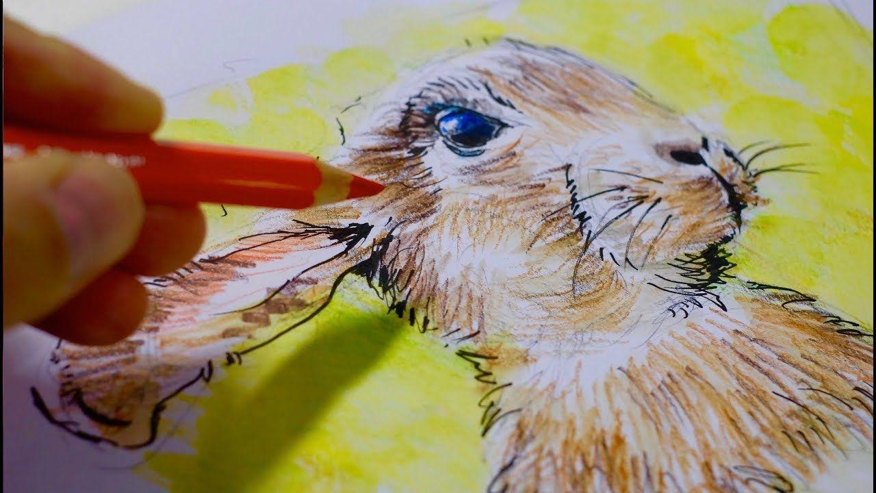 Kaninchen Und Hase Ganz Einfach Zeichnen Lernen 22 Einfach
