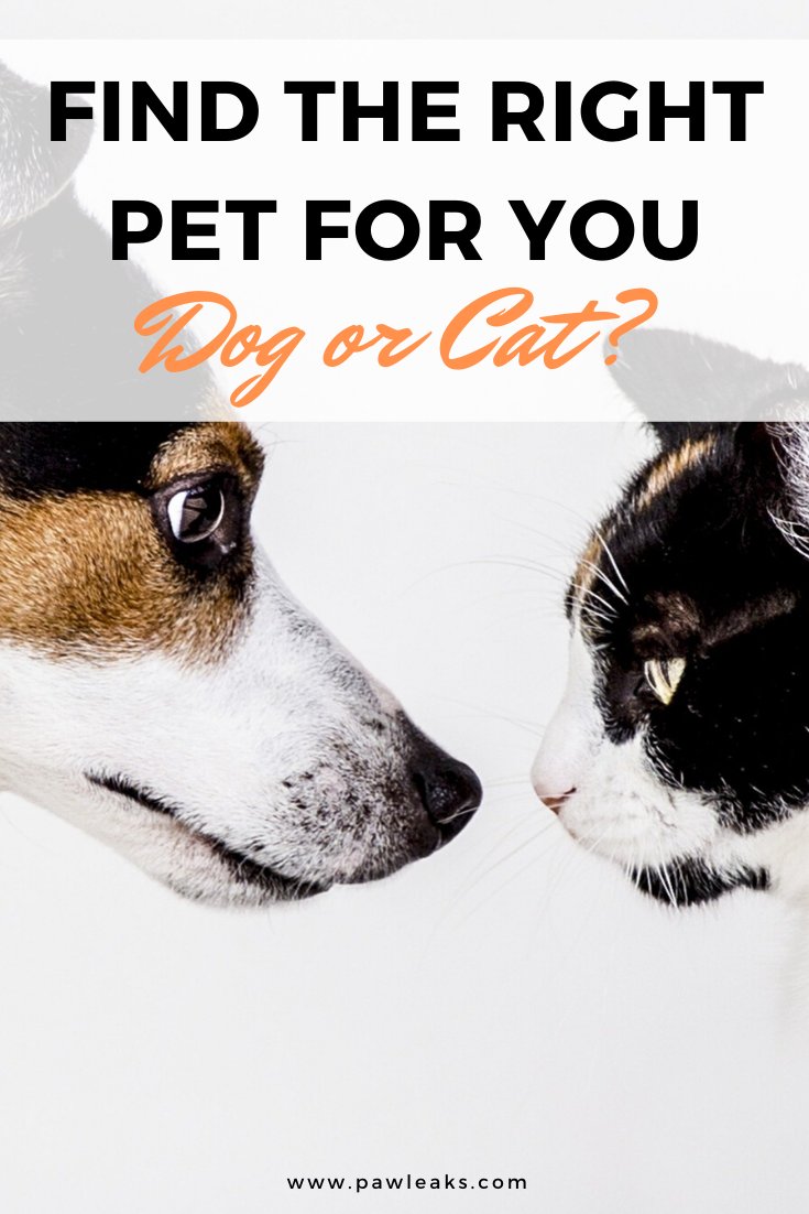 Dog Or Cat Which Pet Is The Right One For You Pawleaks Pet Care Tips Dog Cat Pet Care