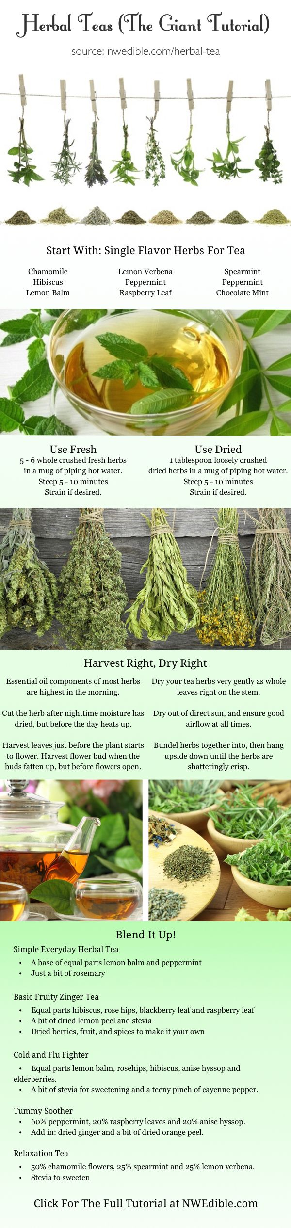 Diy herbal tea from your own backyard full tutorial at www diy herbal tea from your own backyard i was tempted to pin this in home decor i have always loved the look of dried herbs hanging in a kitchen fandeluxe Ebook collections