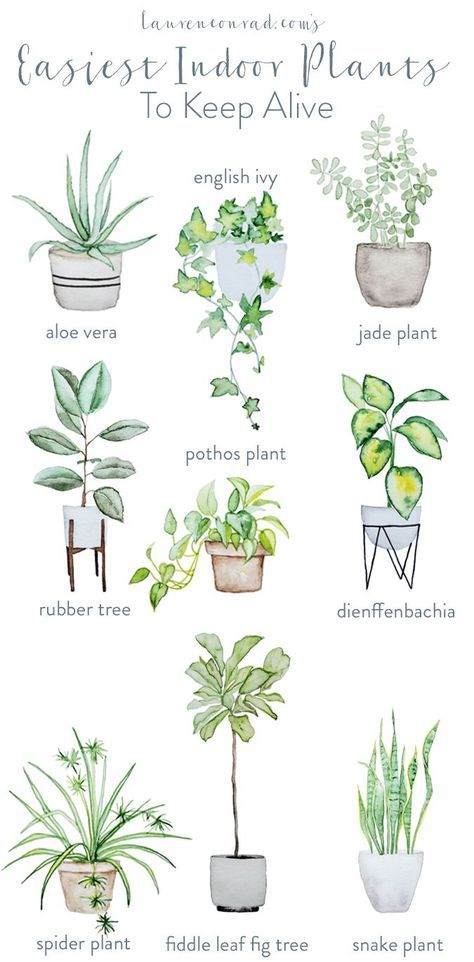 Green Thumb: The Easiest Houseplants to Keep Alive -   17 indoor plants Watercolor ideas