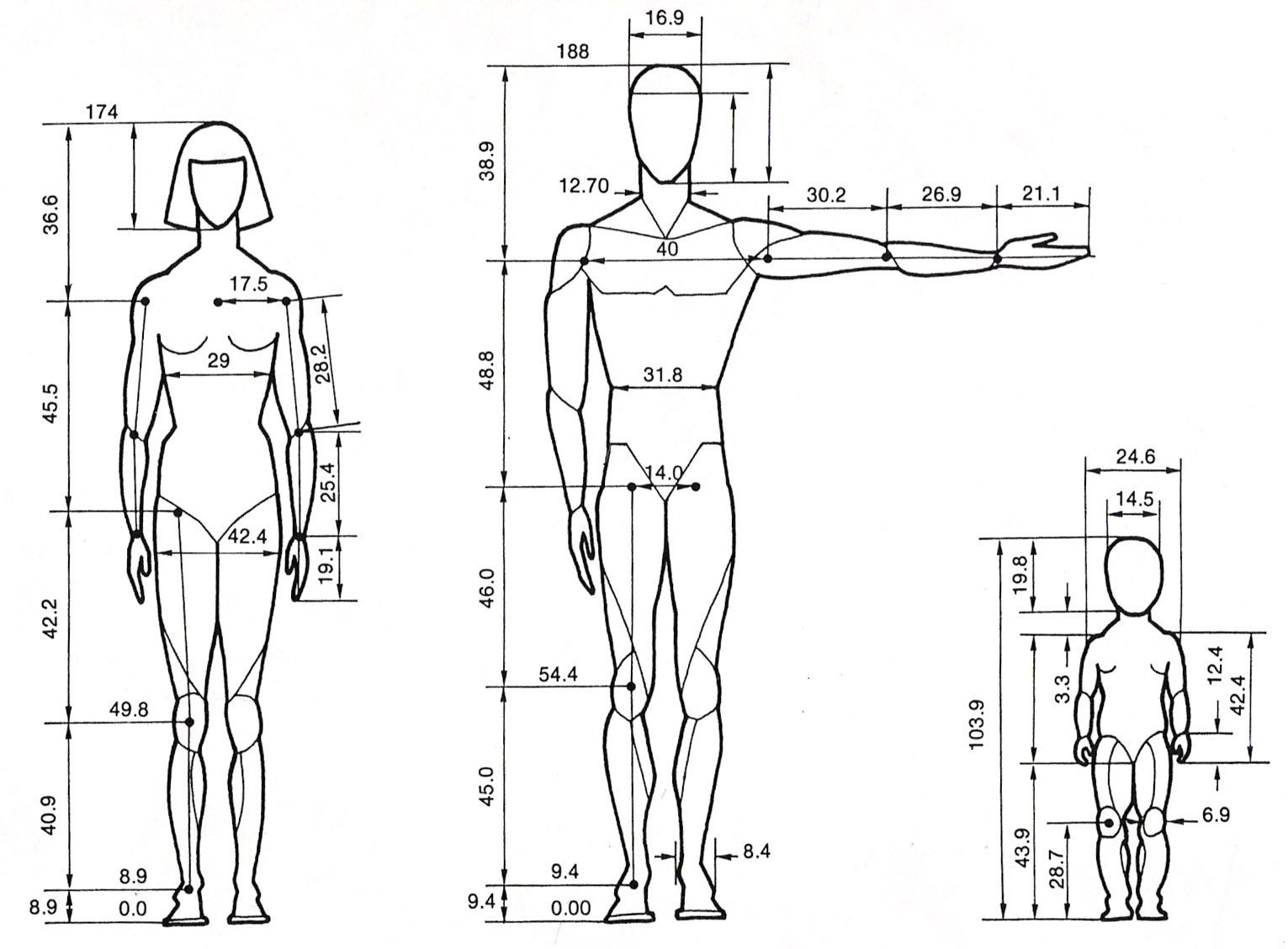 Human Proportions By Bents Stock
