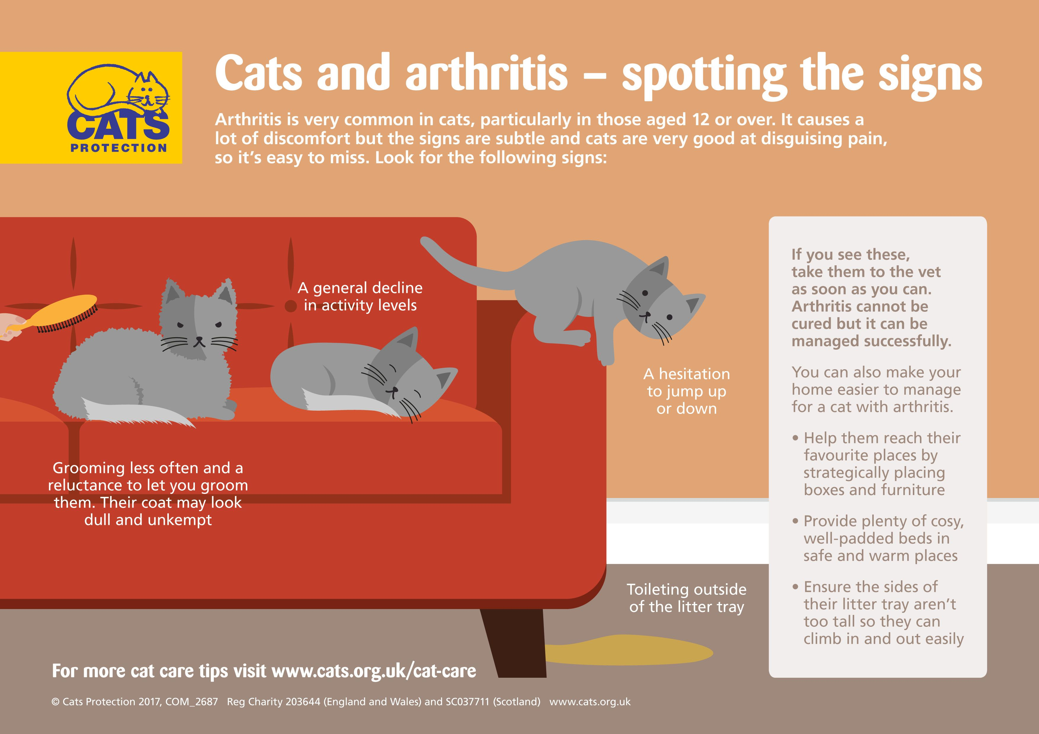Cats And Arthritis How To Spot The Signs Cat Signs Cats Cat Care