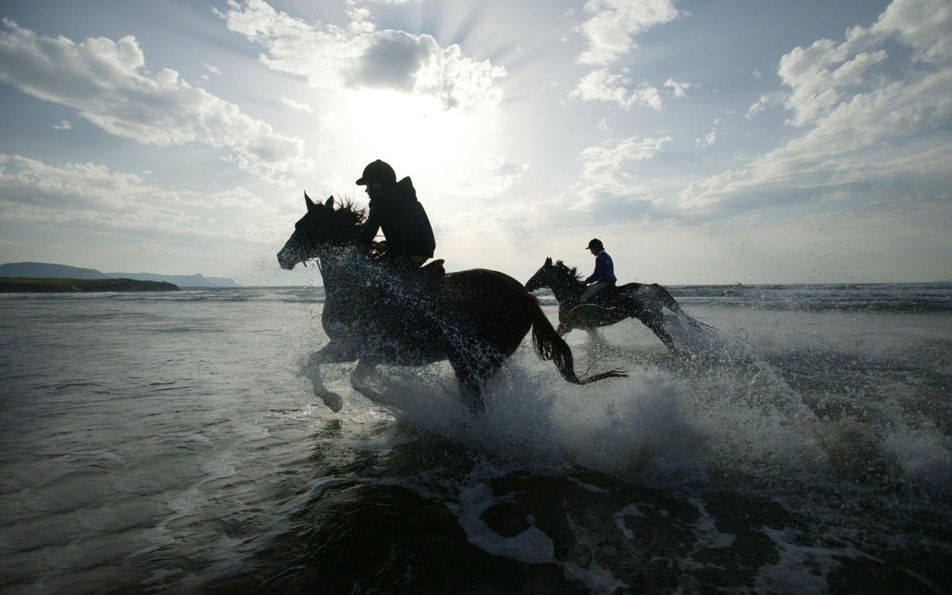 Download Wallpaper Horse Water - fe9b9c8cbbb1b60c05f72ebbb3e62427  Collection_142279.jpg