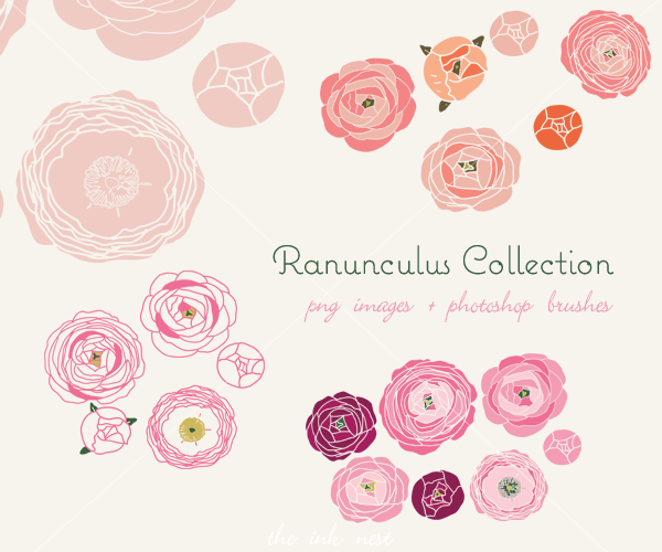 flowers collection ranunculus clip art and photoshop rh pinterest com free photoshop clipart download free photoshop clipart brushes