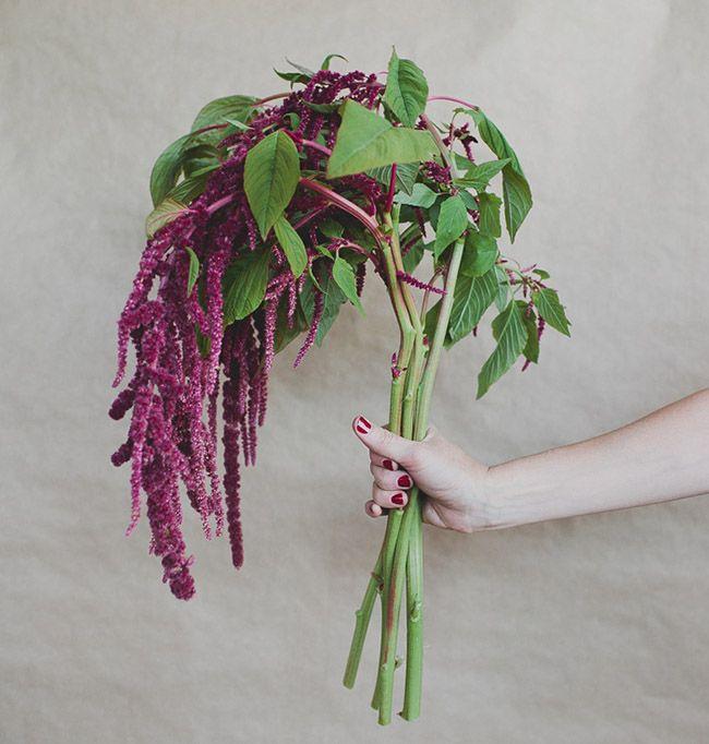 September Wedding Flowers In Season: Seasonal Flower Guide: Winter
