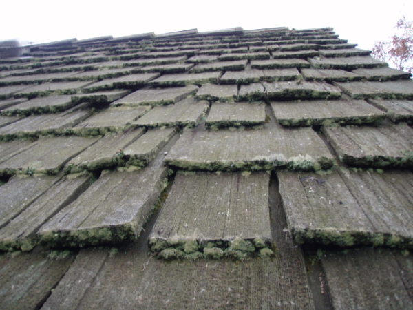 Best These Pewaukee Cedar Shakes Show How Algae And Moss Growth 400 x 300