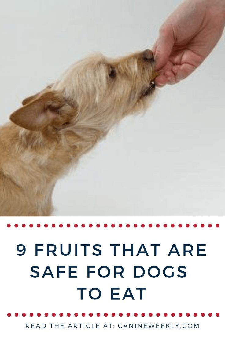 Discover here the best fruits that are safe for dogs to