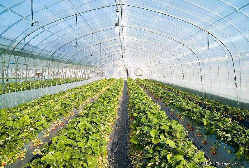 consummate plastic greenhouse