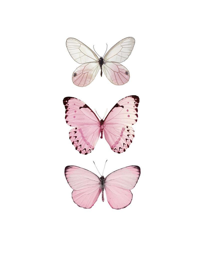 Pink Butterfly Butterfly Butterfly Print Pink Butterfly Print Pink Decor Pink Color Art Butterfly Art Print Butterfly Wall Prints Butterfly Art Print Butterfly Art Butterfly Wallpaper