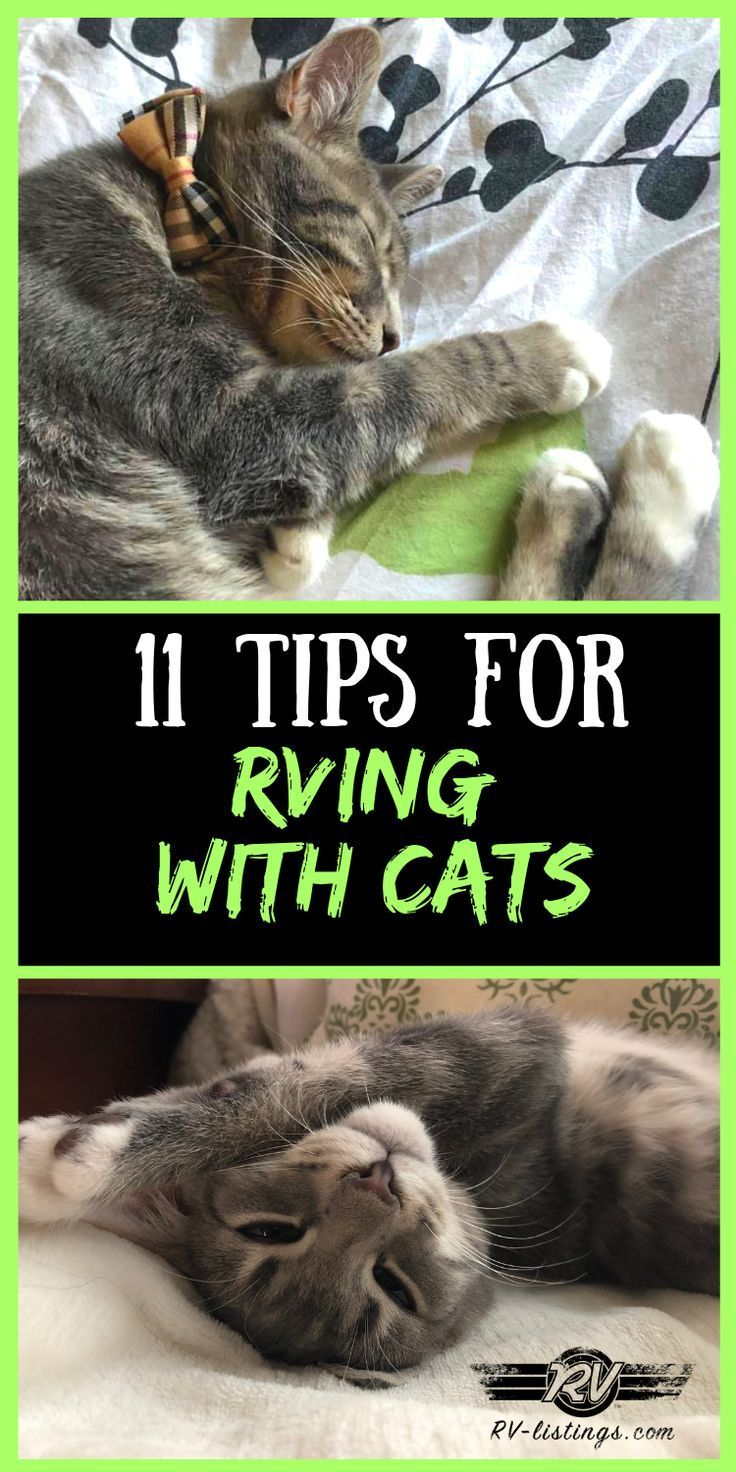 11 tips for rving with cats camping with cats cat hacks
