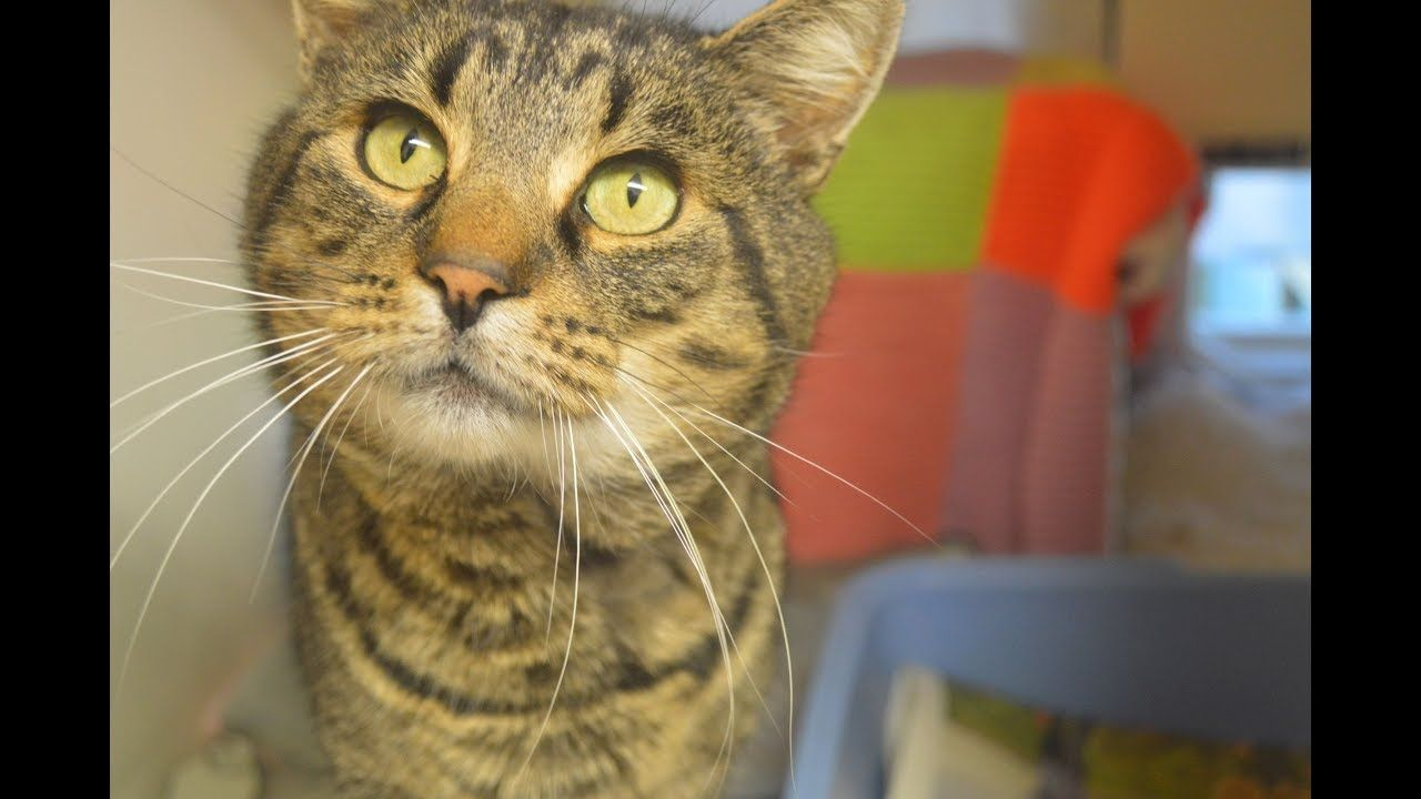 Keano Is Looking For A Forever Home Cats Uk Adoptdontshop In 2020 Cats Animal Welfare Quote Animal Charities