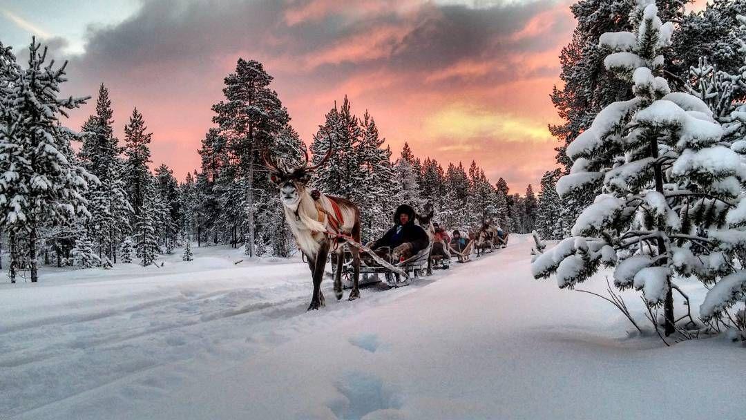 Reindeer sleigh ride, in Inari, Lapland, Finland. By ...