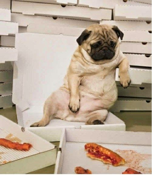 5 Pugs Facts That Will Blow Your Mind Cute Pugs Pugs Cute Animals