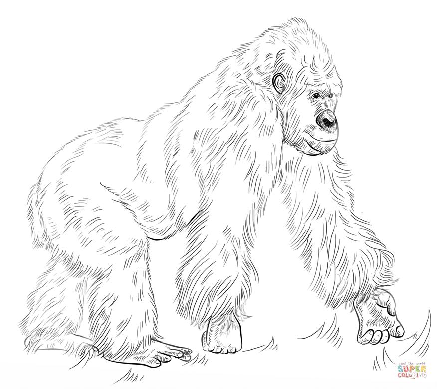 Silverback Gorilla Coloring Page Free Printable Coloring Pages Animal Coloring Pages Silverback Gorilla Coloring Pages