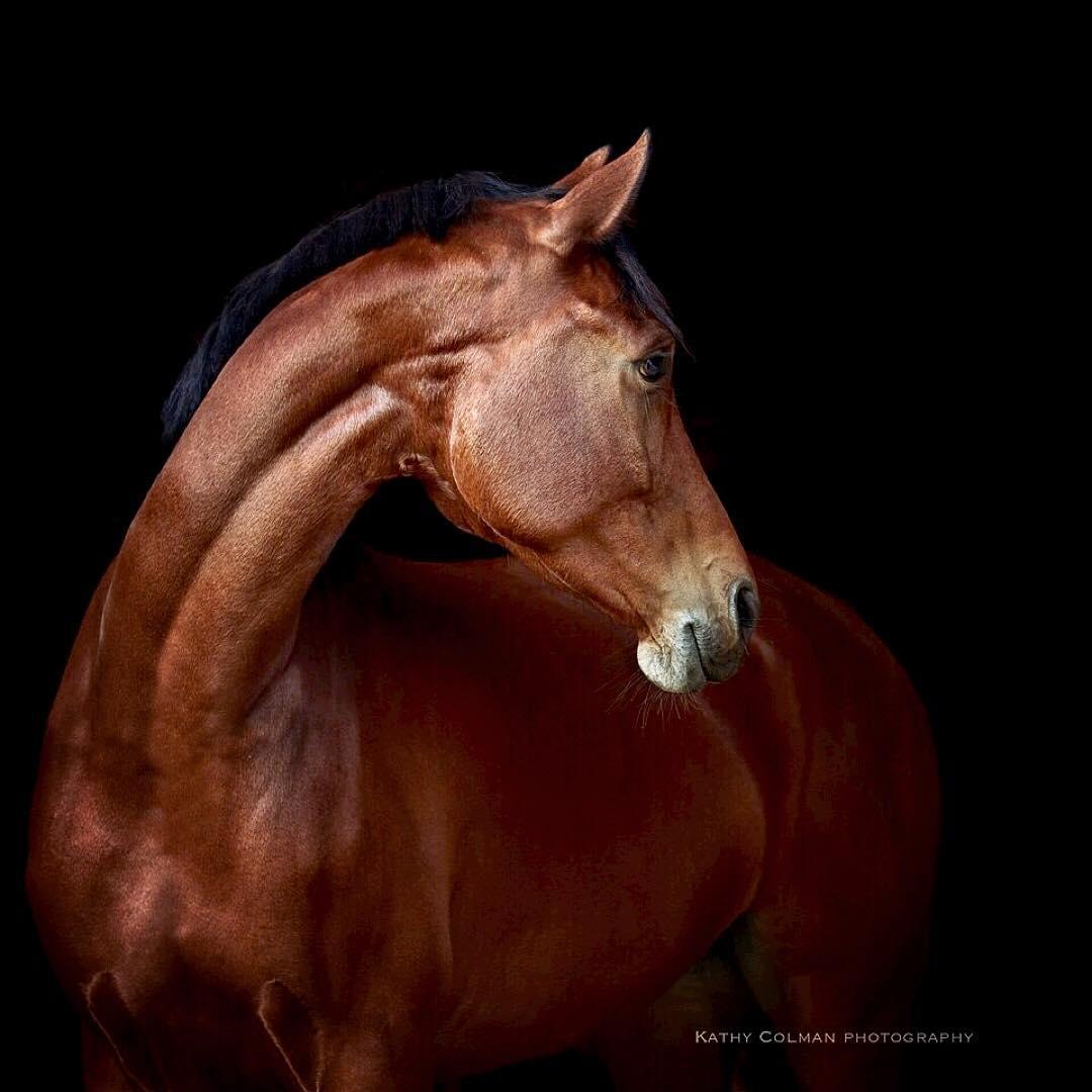 2d5ad71fb0 Pin de Quique Maqueda en Kind of horses