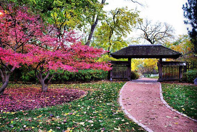 Osaka Gardens On Wooded Island Chicago Permanently Closed Japanese Garden Amazing Gardens Garden