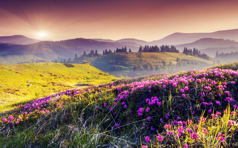 Terra/Natureza Landscape  Pink Flower Sunbeam Nature Field Flower Papel de Parede