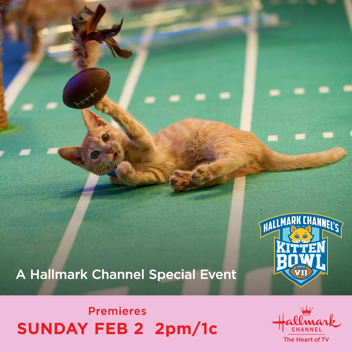 Will This Be The Winning Touchdown For The Little Long Tails Find Out During Kittenbowl Sunday February 2nd 2pm 1c Only In 2020 Kitten Bowls Kittens Cutest Kitten