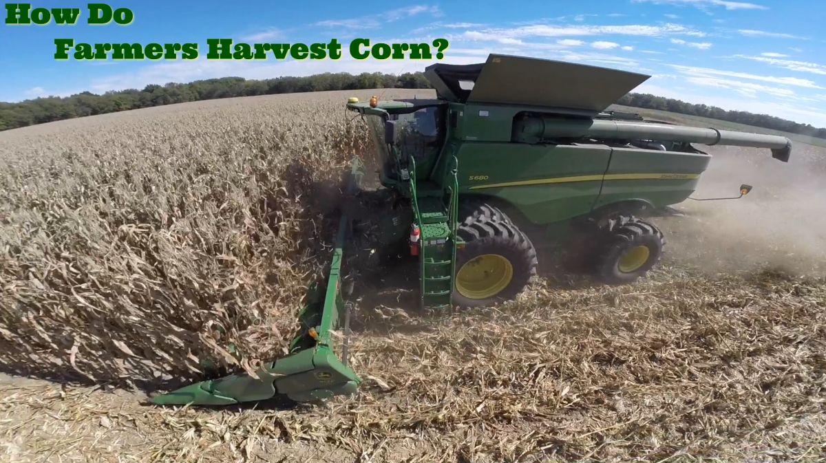 How Do Farmers Harvest Corn Harvest corn, Farmer, Harvest