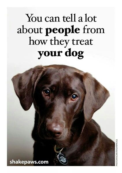Pin By Cindy Varner On Just Saying Dog Cancer Pet Insurance For Dogs Pets