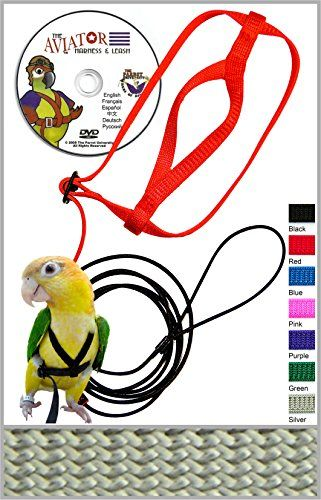 The Aviator Pet Bird Harness And Leash Small Silver See This