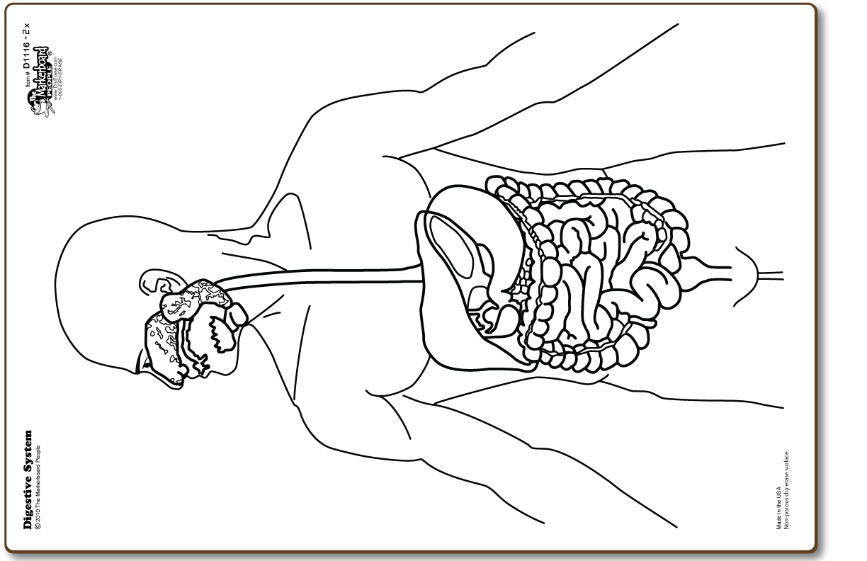 Digestive System Dry Erase Board With Blank Board On The