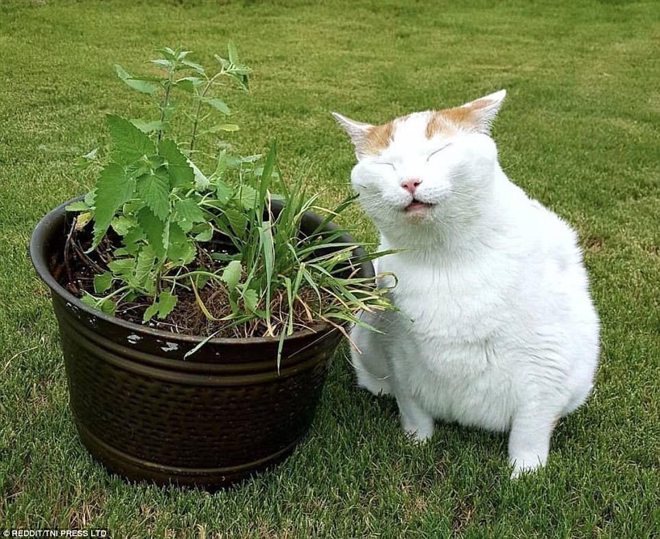 Hilarious photos show family pets high on catnip Bad
