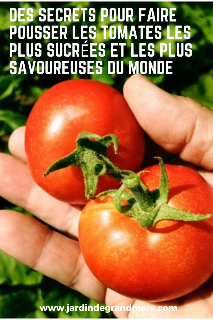 Faire Pousser Tomates En Pot que dit mieux l'été qu'une grosse tomate mûre et très