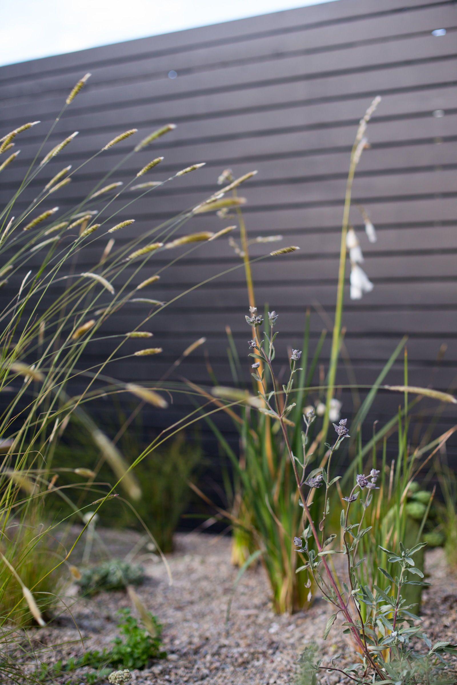 Designer Profile Talc Studio Ornamental Grasses Garden Plants