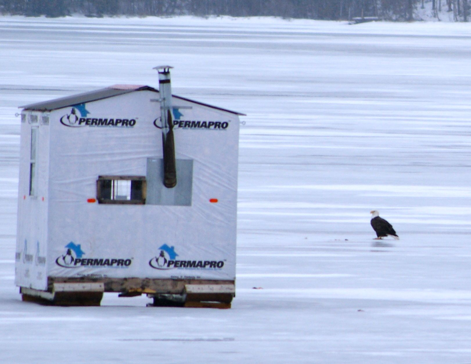 Moosehead lake area has many ponds where you can go ice for Ice fishing maine
