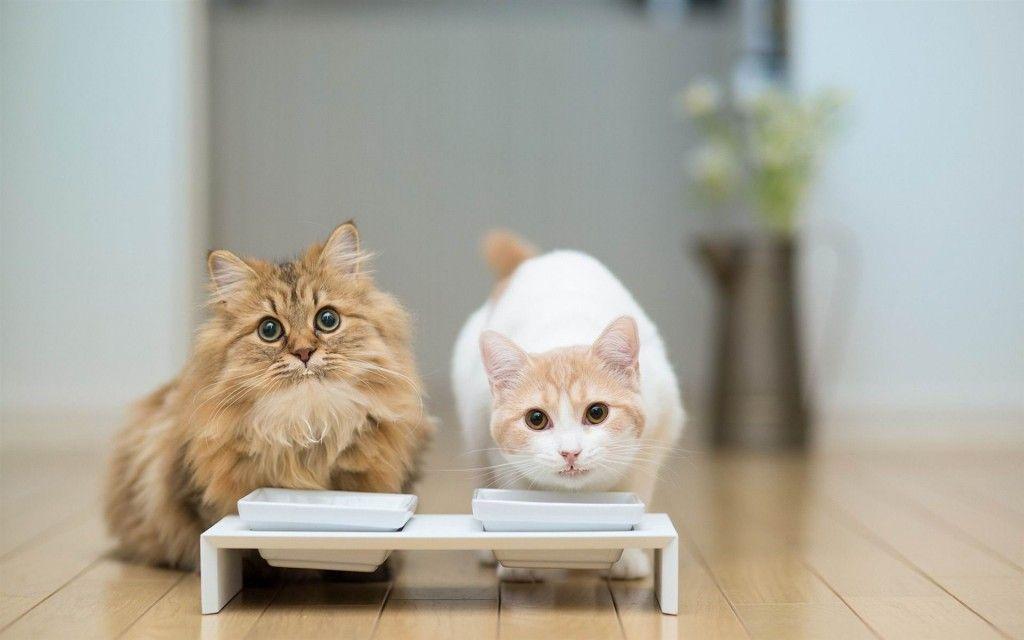 Lovely Cats Drink Milk HD Wallpapers Desktop HD Wallpapers