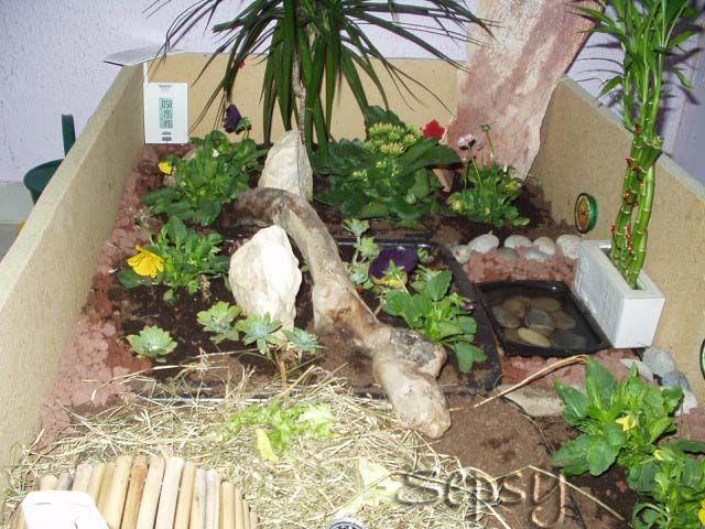 terrarium pour sulcata terrarium tortue pinterest. Black Bedroom Furniture Sets. Home Design Ideas