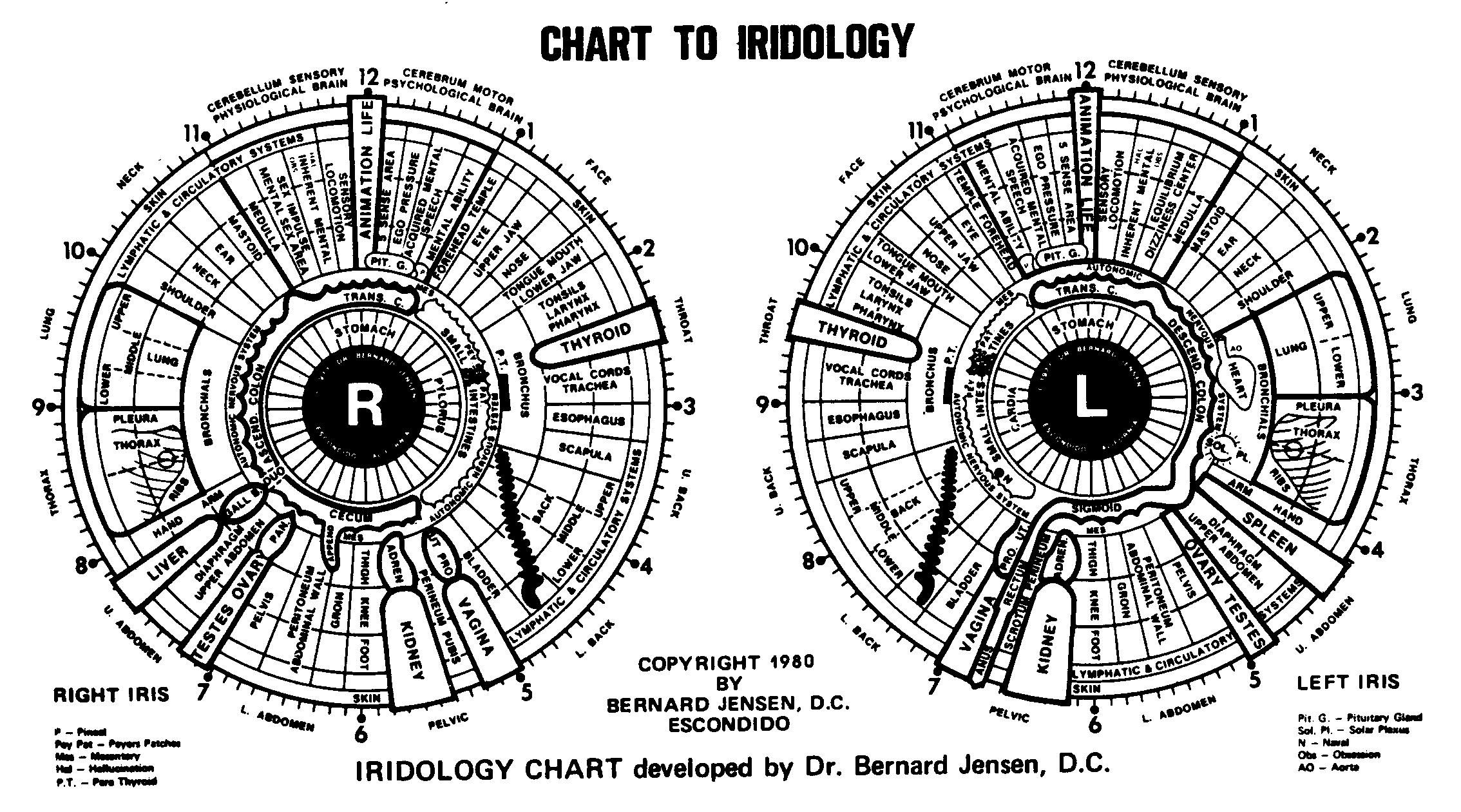 Iridology chart this is the developed by dr bernard jensen after years of research and intense study represents also rh pinterest