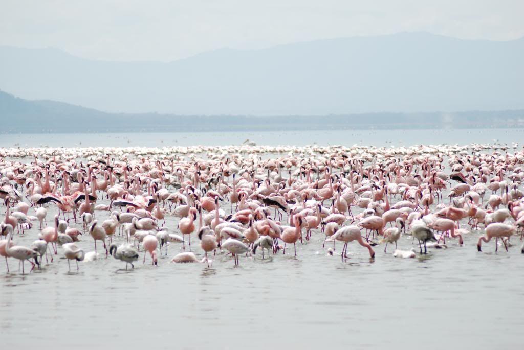 Prírodné divy sveta #3 - Jazero Nakuru v Keni