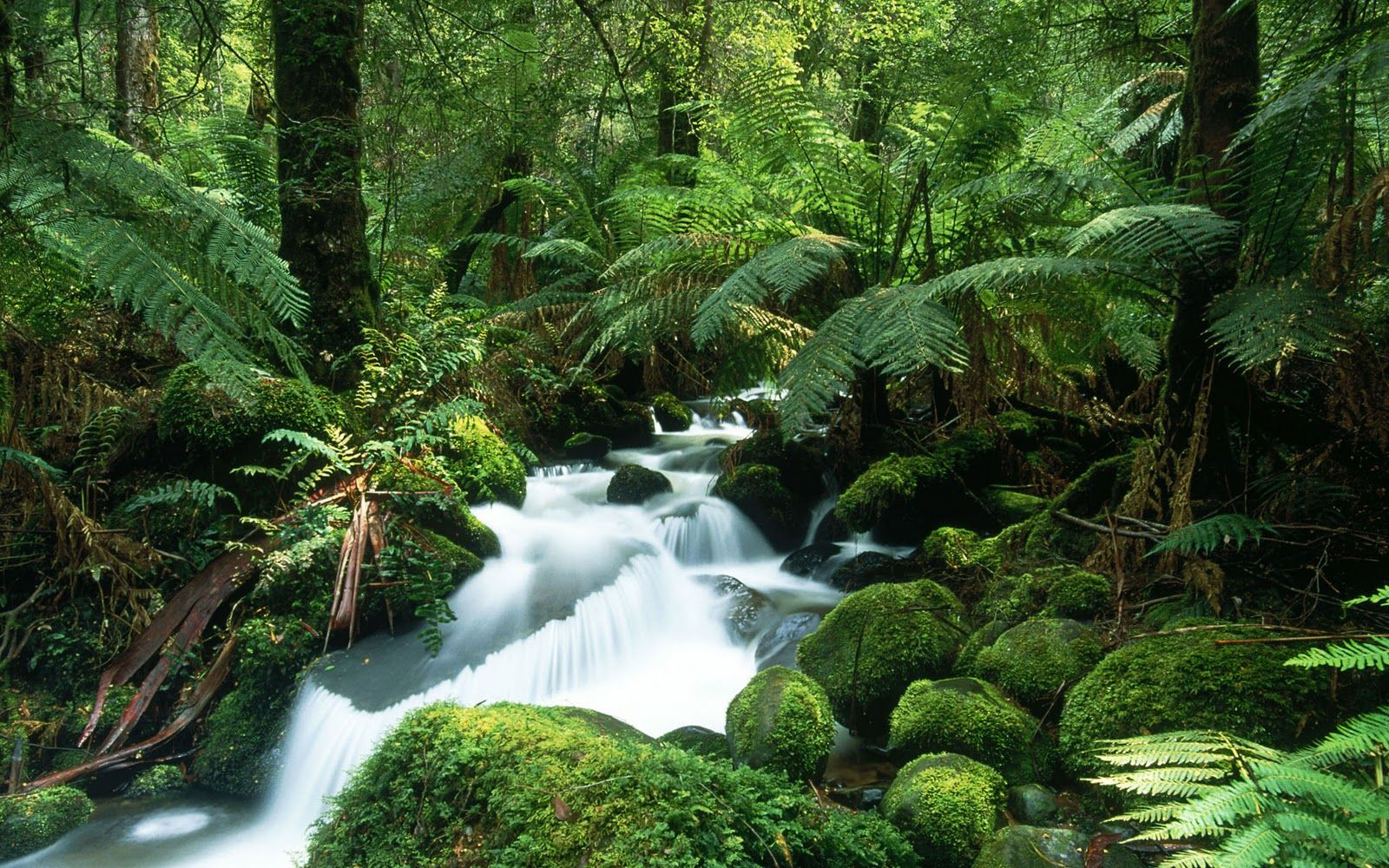 Tropical Rainforest Background Images Free Rainforest Pictures Rainforest Plants Jungle Images