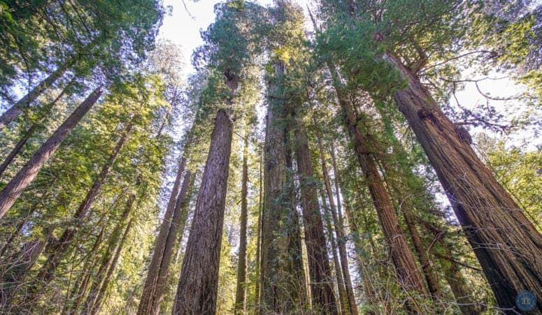 Ultimate West Coast Road Trip on the California Coast #westcoastroadtrip